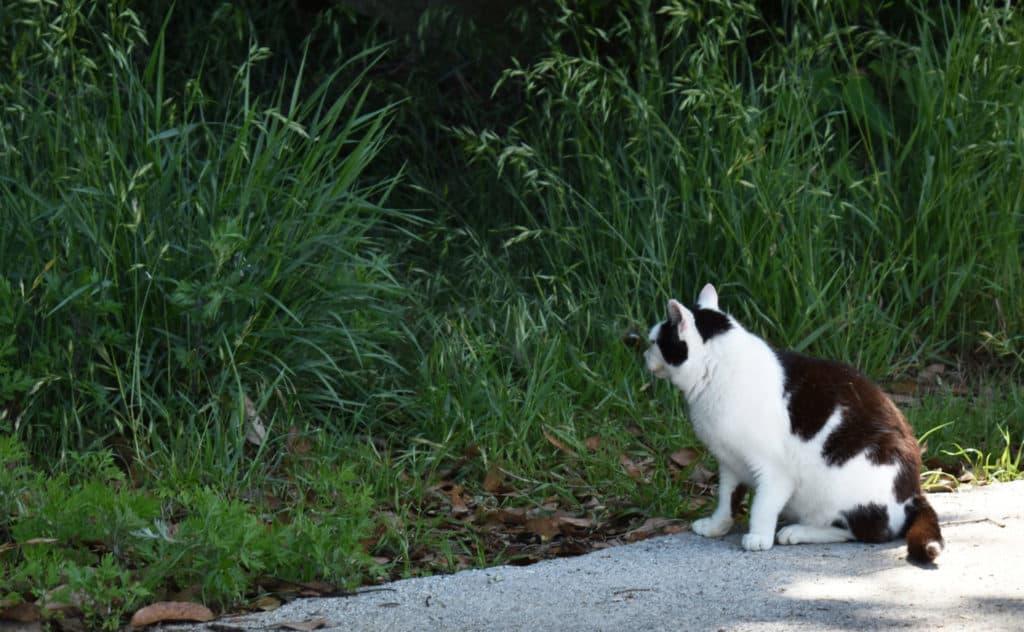 猫、にゃんこ